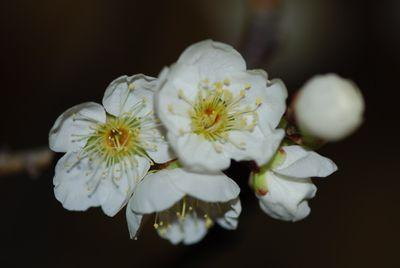 White flower macro clusters