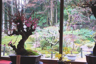 Bonsai inside garden out
