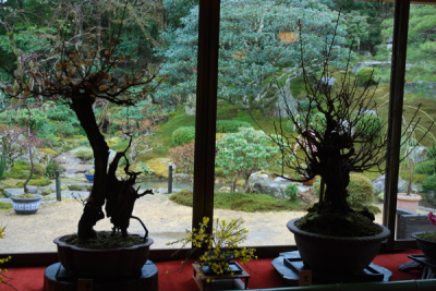 Bonsai in dark garden in color