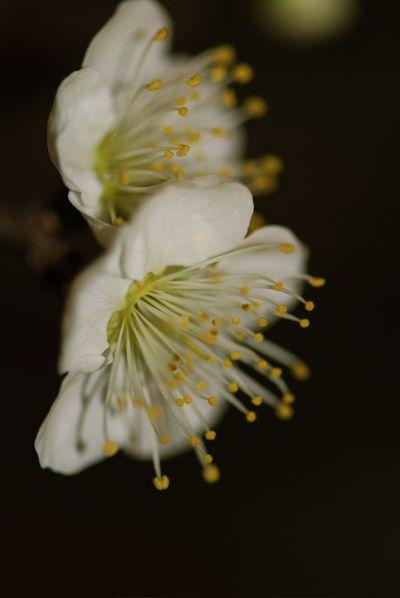 White flower - charlies choice