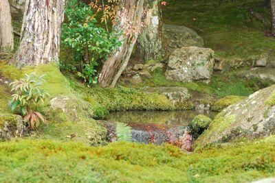 Outside water moss