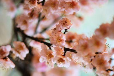 Blush flowers macro