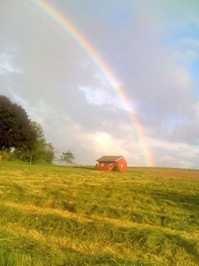 Rainbow vertical