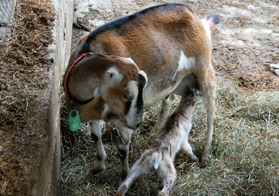First feeding on mom