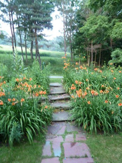 Front door day lilies