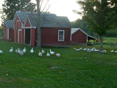 Farm on saturday