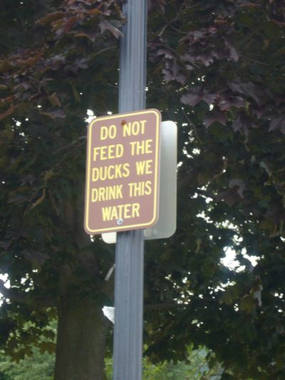 Dont feed duck