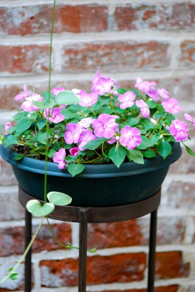 Vinca vine and impatiens
