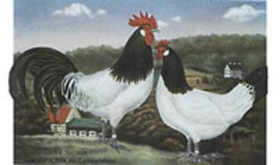 Lakenvelder