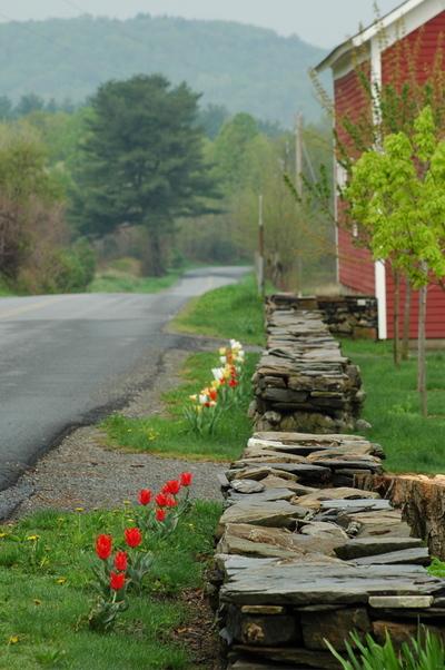 Tulipsstoneborder